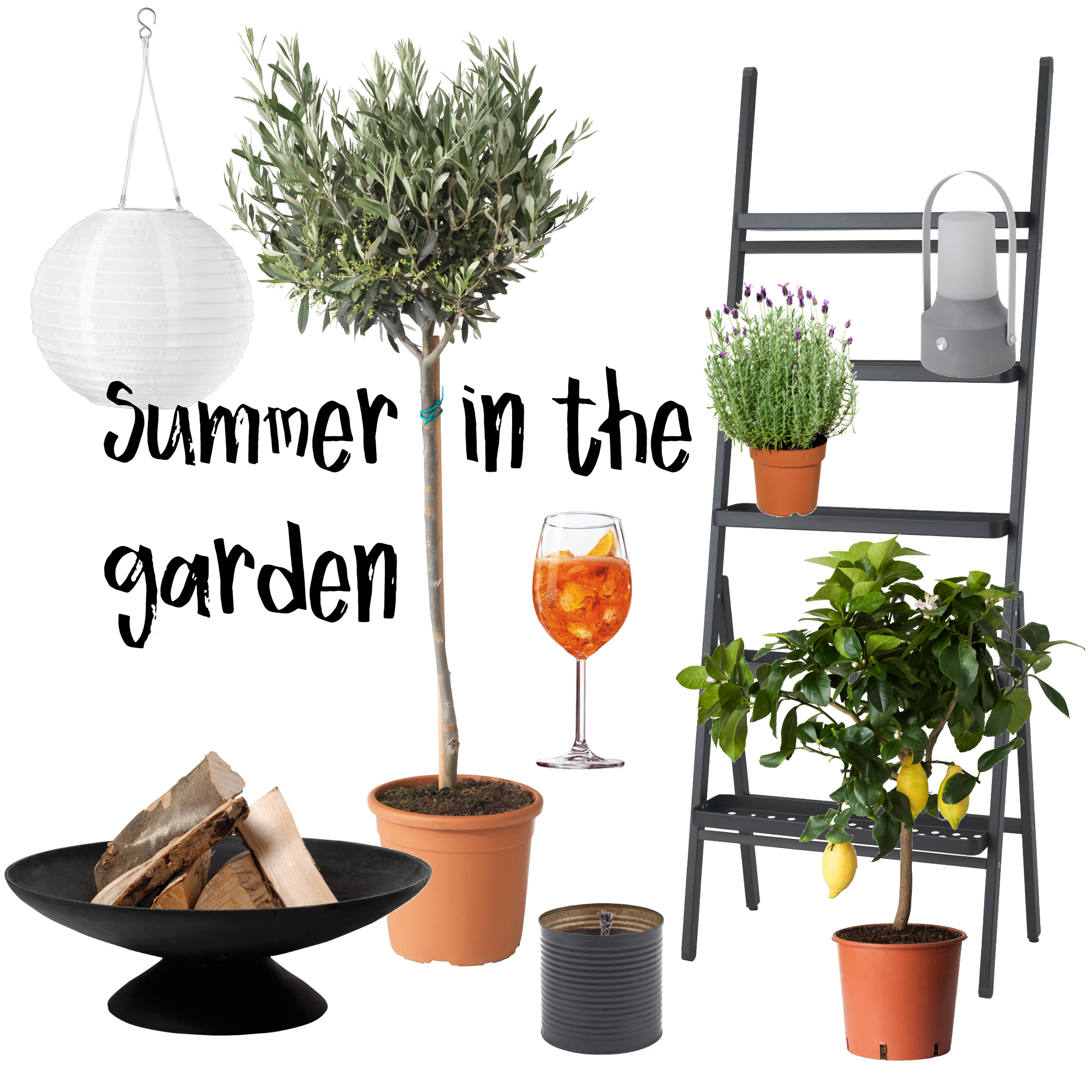 Summer in the garden